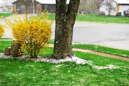 snow-in-spring_4-05_41_edited-1.jpg