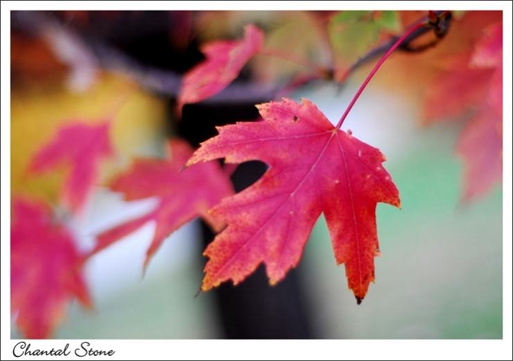 october2707_dsc_0353_edited-2.jpg